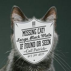 Missing cat! #Typography  #Tipografia