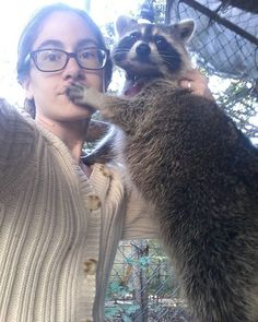 """""""Hush mom, just keep scratching"""" says Grace ~♡ Rocky Raccoon, Pet Raccoon, Funny Raccoons, Baby Animals, Funny Animals, Hush Hush, Otters, Make Me Smile, Mammals"""