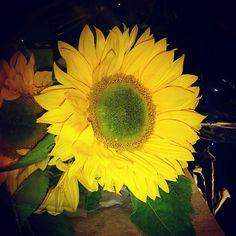 Sun flowers, so cheerful