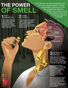 How much do you know about the Power of Smell? Dive into this powerful sense and learn why Forever Essential Oils are your ticket to exploring a whole new world.