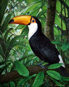 Tropical Art, Tropical Birds, Exotic Birds, Colorful Birds, Tropical Paintings, Bird Drawings, Animal Drawings, Bird Patterns, Bird Pictures