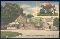 The Guernsey Cow, Exton PA