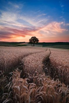 Running through the wheat field
