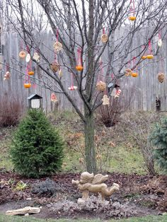 Tree wth Christmas tree ornaments for the birds (Photo credt: Karen Geisler)