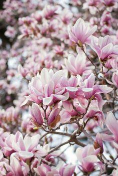 spring spring pinterest lila baum und alles lila. Black Bedroom Furniture Sets. Home Design Ideas