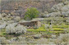 Primavera en el Valle del Jerte www.vallecereza.com