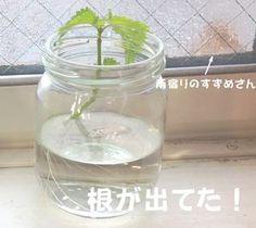 Herb Garden, Mason Jars, Life Hacks, Glass Vase, Herbs, Green, Plants, Herbs Garden, Mason Jar