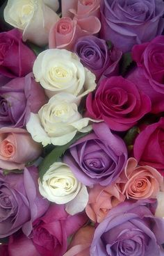 Beautiful colors!! Rose Bouquet by sheryl.dolphinjazz, via Flickr