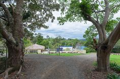 Jacaranda Cottages, Maleny.  Pet friendly accommodation