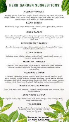 DIY Garden: herbs for styles of gardens from medicinal gardens to fairy gardens to dyers gardens Designing Your Herb Garden discusses design ideas for theme gardens and color selections. Selections of medicinal gardens, fairy gardens, tea gardens, etc. Garden Types, Herb Garden Design, Diy Garden, Garden Care, Edible Garden, Garden Landscaping, Garden Ideas, Herbs Garden, Bamboo Garden