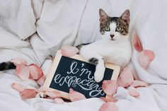 my foster cat was expecting soooo obviously a maternity shoot happened Winter Maternity Photos, Maternity Pictures, Cat Photography, Pregnancy Photography, Pregnant Cat, Foster Cat, Arte Dachshund, Cat Room, Dog Pin
