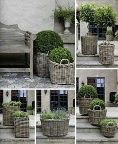 Dove grey wicker baskets with topiary plants and boxwood . Garden Cottage, Farmhouse Garden, Garden Planters, Basket Planters, Boxwood Planters, Garden Basket, Boxwood Shrub, Rattan Planters, Topiary Plants
