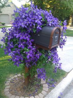Mailbox covered with beautiful flowering clematis vine! Mailbox Planter, Mailbox Garden, Mailbox Landscaping, Landscaping Tips, Garden Landscaping, Landscaping Software, Mailbox Flowers, Landscape Design, Garden Design