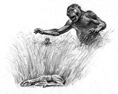 Australopithecus africanus - by Jay H. Matternes
