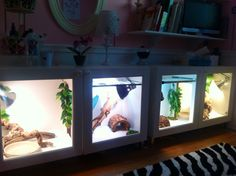 Our Bearded Dragon cages ..IKEA BESTA cabinets hacked into two cages