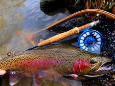 Mikey Wright 's Fly-fishing Photo of a Steelhead – Fly dreamers . Fly dreamers, the place for those who live and dream about fly-fishing. Find the best videos, fishing reports, fly-tying instructions and more! Usa Fishing, Crappie Fishing, Fishing Girls, Kayak Fishing, Women Fishing, Fishing Stuff, Fishing Rods, Carp Fishing, Fishing Tackle