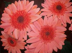 Gerber Daisies   Artist  Sharon Duguay   Medium  Painting - Acrylic On Canvas   Description  Blooming Gerber Apricot daisies with a firery center on a black cherry background,it's vibrant fragrant petals lifting their vivid centers to the sun