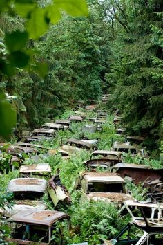 Somewhere in a forest,there were cars hidden in the overgrowth, looking like a scene out of a nuclear apocalypse, or a Fallout games.    In fact they're in the Ardennes Forest belong to the American service men, after the war they were responsible for shipping their vehicles back to the States, which they could not afford.    Instead, the cars were brought up to a clearing in the forest, parked and left.