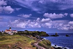 Jeju seopjikoji by hl4rbc, via Flickr  Jeju Island, South Korea