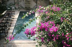 All it takes to brighten our day is a little sun and our pretty pink bougainvillea.  Photo by @laurencarrollphotography