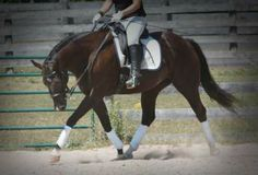 """The Dreaded """"Rein Lame"""": A Mystery 