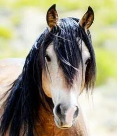 """"""" The wind of heaven is that which blows between a horse's ears""""...                     Arabian proverb..."""