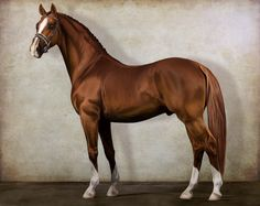 Digital horse painting - RWS Canto by feverpaint on deviantART