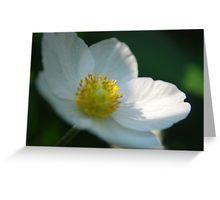 White Flower 4 Greeting Card