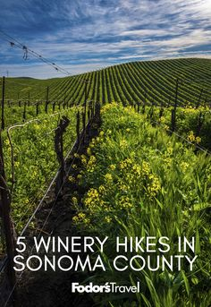 Beyond winery tours and tastings, some vineyards host hikes and adventures, which are the perfect way to further explore the terroir. #Travel #Sonoma #Wine