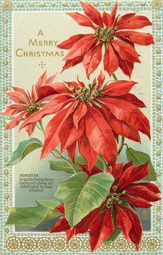 Una Feliz Navidad poinsettia rojo