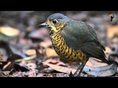 Amazing Birds - Tropical Birds Video - YouTube