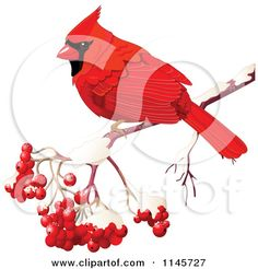 Clipart of a Red Cardinal on a Branch with Berries - Royalty Free Vector Illustration by Pushkin