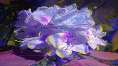 Floral Beauties is an animated gif that was created for free on MakeAGif.