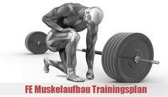 Du willst endlich beginnen, wirklich Muskeln aufzubauen? Bist du neu und suchst nach einem optimalen Trainingsplan für Muskelaufbau oder hattest du bisher keinen Erfolg mit anderen Trainingsplänen? Dann ist der FE Muskelaufbau Trainingsplan (FEM) genau das... weiterlesen