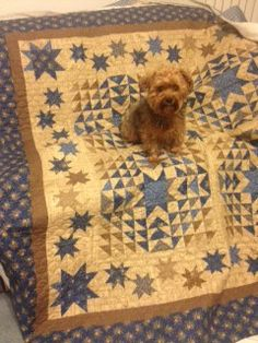 The Star Spangled quilt is now beautifully quilted by Sheri Mecom. Maggie May always has to pose!