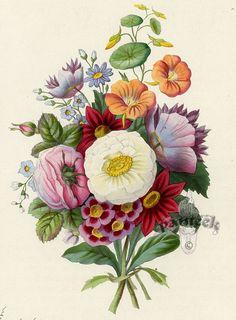 Gallery.ru / Фото #78 - цветы10 - aklaxoma Vintage Flowers, Vintage Floral, Victorian Flowers, Floral Artwork, Seed Catalogs, Botanical Art, Vintage Botanical Prints, Botanical Flowers, Botanical Illustration