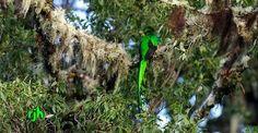 El Quetzal !!!