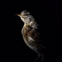 Karin Reezigt Rembrandt, Bird, Animals, Kunst, Animales, Animaux, Birds, Animal, Animais