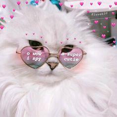 tag your cutie! Cute Cat Memes, Cute Love Memes, Funny Cute, Kittens Cutest, Cute Cats, Heart Meme, Wholesome Memes, Meme Faces, Reaction Pictures
