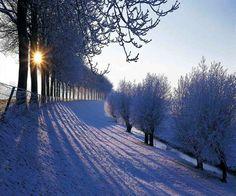 Winter scene.