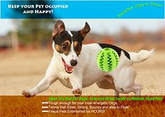 TOY IQ BALL FOR DOGS & CATS [Dental Treat][Bite Resistant] Durable Non Toxic- BPA FREE-Strong Tooth Cleaning Dog Toy Balls for Pet IQ Training/Playing/Chewing,Soft Rubber,Bouncy,Tennis Ball Size   Check it out-->  http://mypets.us/product/toy-iq-ball-for-dogs-cats-dental-treatbite-resistant-durable-non-toxic-bpa-free-strong-tooth-cleaning-dog-toy-balls-for-pet-iq-trainingplayingchewingsoft-rubberbouncytennis-ball-size/  #pet #food #bed #supplies