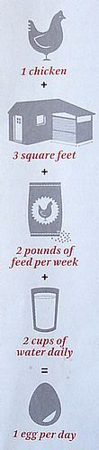 1 chicken + 3 square feet + 2 pounds of feed per week + 2 cups of water daily = 1 egg per day. #urbanfarmmath