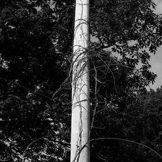 """#exploring #Maine #summer #bnw #blackandwhite #wandering #myMaine #landscape #daylight #exploreMaine #exploreAmerica"" Photo taken by @ndoocy on Instagram, pinned via the InstaPin iOS App! http://www.instapinapp.com (09/01/2015)"