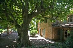 Shady places near the house - Eyguieres house rental Provence, Swimming Pools, Farmhouse, Smoke, Park, Bedroom, Places, Garden, Room