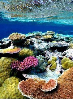 Quel beau récif de corails !