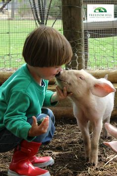love a little animal today (James meets Audrey at Freedom Hill Sanctuary. Animals For Kids, Farm Animals, Cute Animals, Amor Animal, Baby Pigs, This Little Piggy, Precious Children, All Gods Creatures, Animal Rights