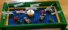 Science Project-3D Plant Cell Model made with our son's LEGOs.  He included Cell Wall, Cell Membrane, Cytoplasm, Nucleus, Chromosomes, Vacuoles, Mitochondria and Chloroplast.