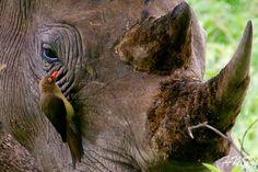 Through POWERSful Lenses . . . .: Pilanesberg National Park, South Africa