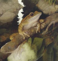Four Lined Tree Frog-Borneo - Frog Song, by Brenda Z. Guiberson, illustrations by Gennady Spirin.