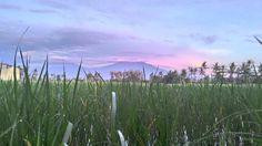 Sunrise #ijen
